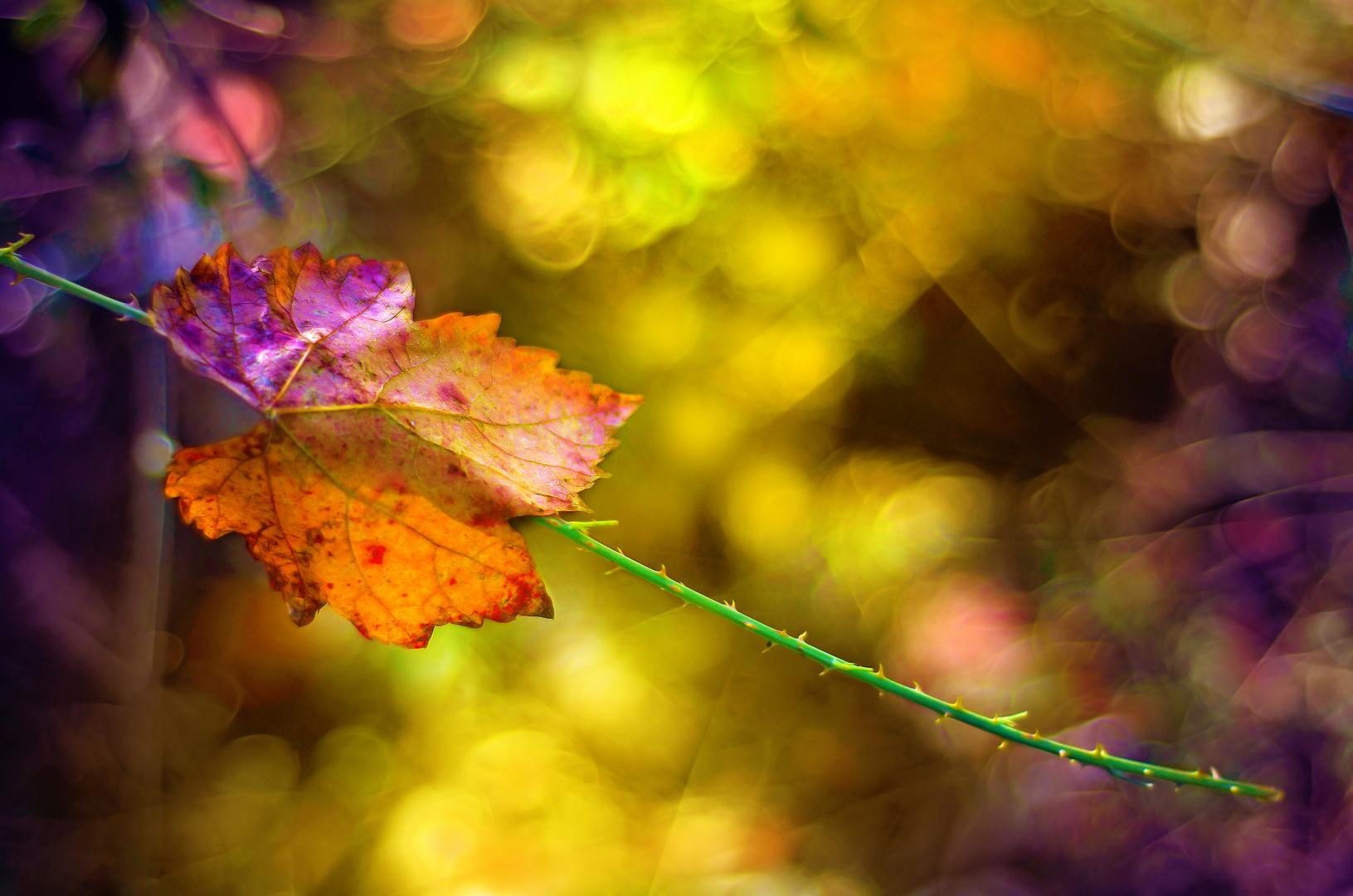 La luz y las hojas de colores.