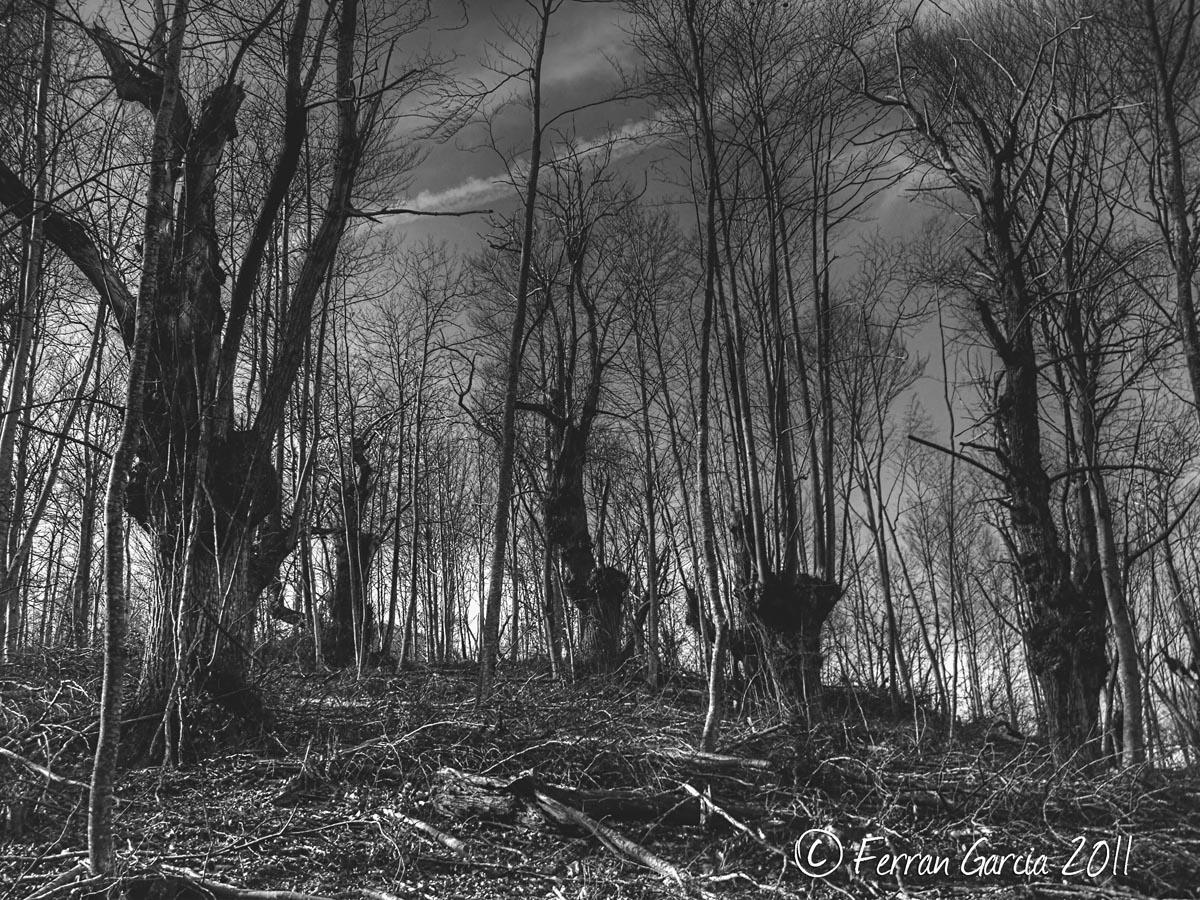 La magia del Bosque I