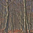 La magia del Bosque II
