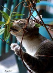 La mangeuse de plantes