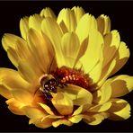 La margarita y la abeja.