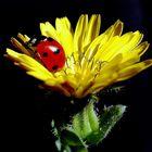 La Mariquita y la Flor