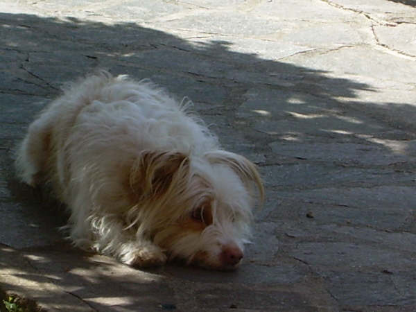 la mia cagnolina Meggy