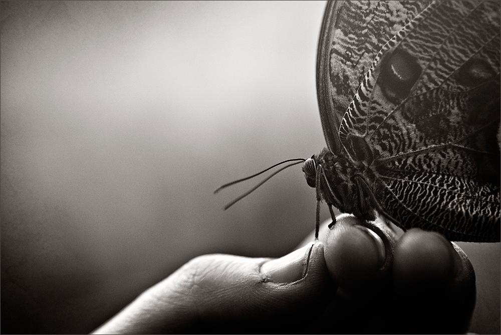 la mia farfalla