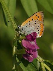 la mia prima farfallina