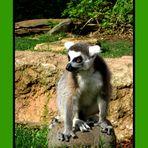 La mirada del Lemur