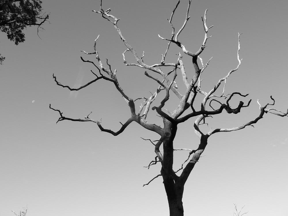 La mort d'un arbre n'est rien