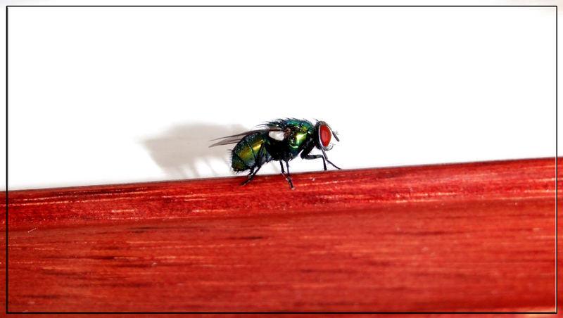 La mosca 2