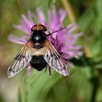 La mosca e il fiore
