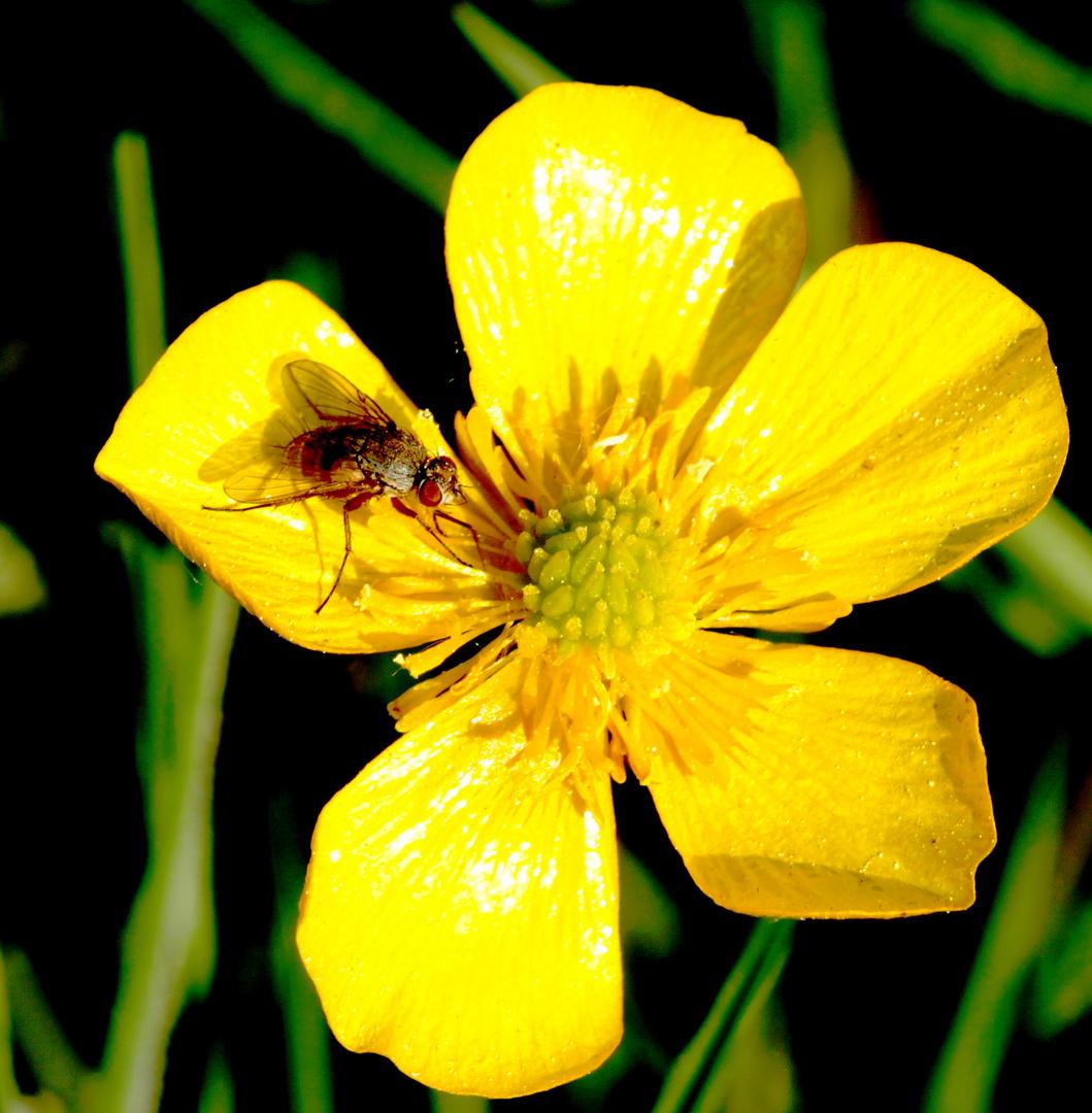 la mouche et la fleurette