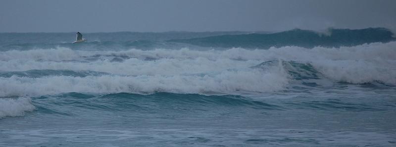 La mouette et les vagues