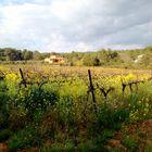 La Nature, tout simplement ! en Provence ...