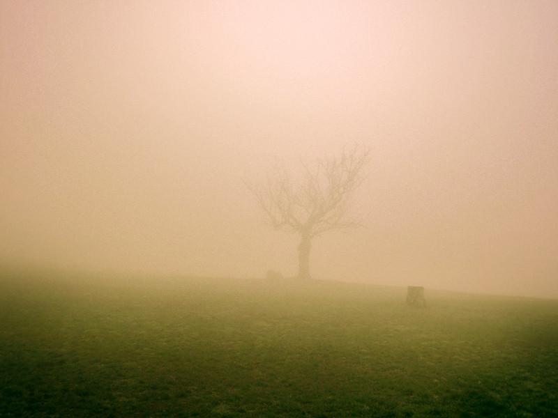 la nebbia gl'irti colli.