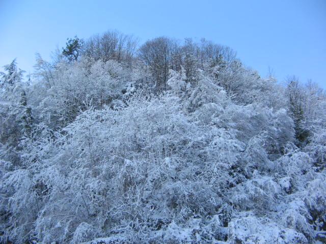 la neve... che spettacolo della natura....