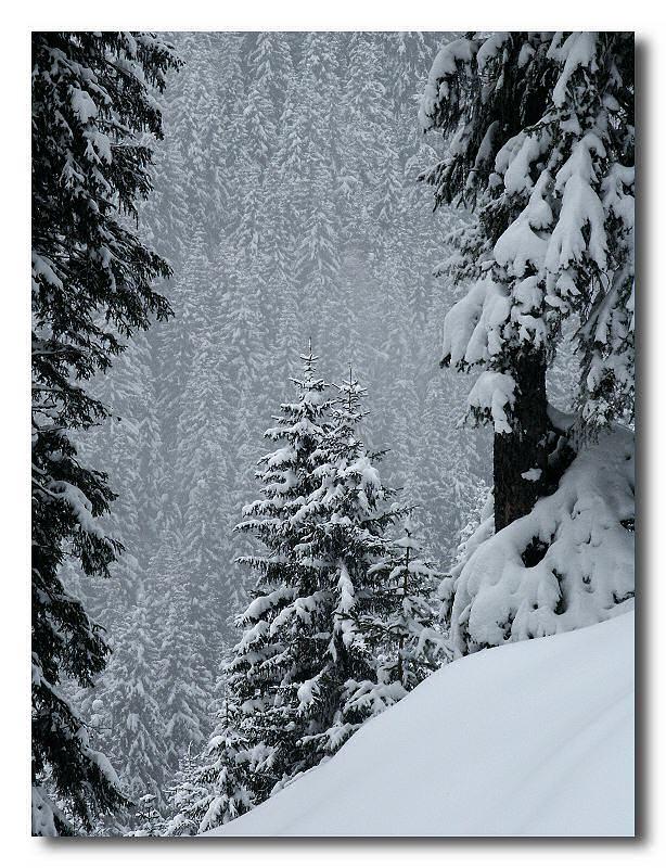 La nevicata