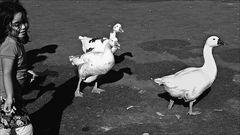 La niña y los gansos