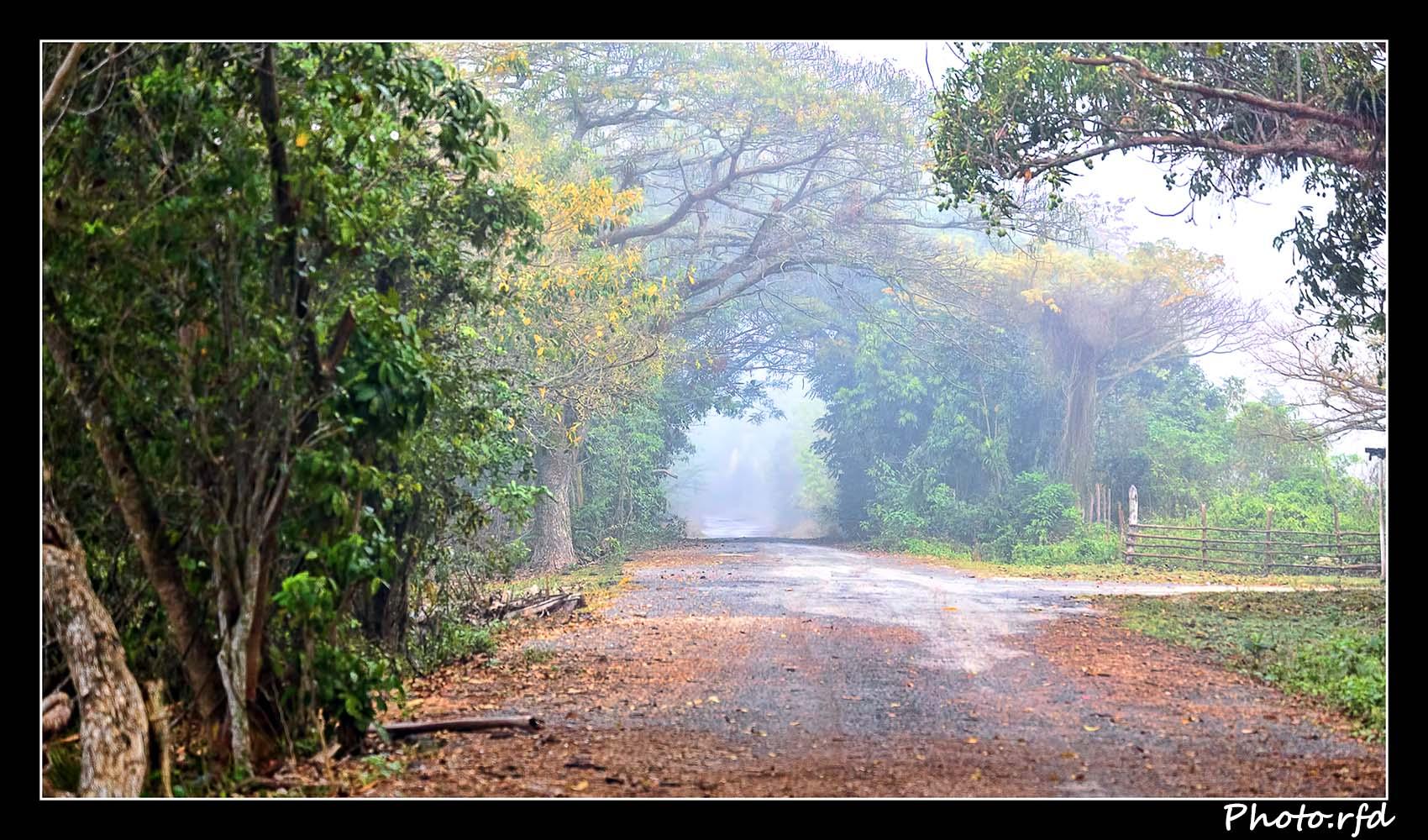 La niebla del camino