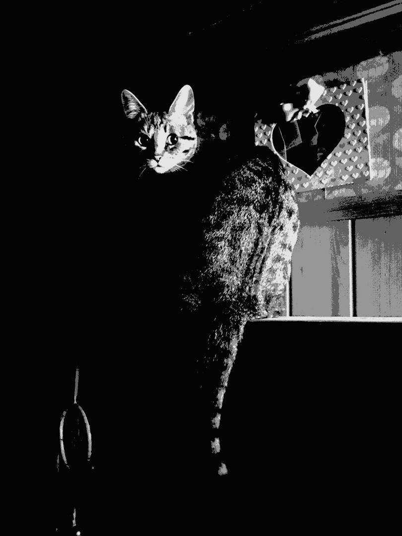 La notte due occhi nel buio.