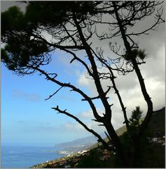 La Palma 5
