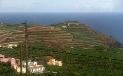 La Palma: Bananen!