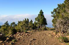 La Palma - Impressionen - Höhenlandschaft - Inselnordseite - Nr. 10