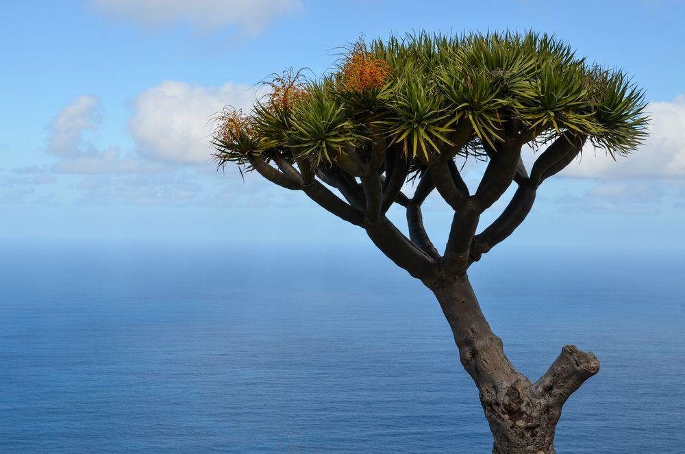 La Palma - Impressionen - Nr. 2