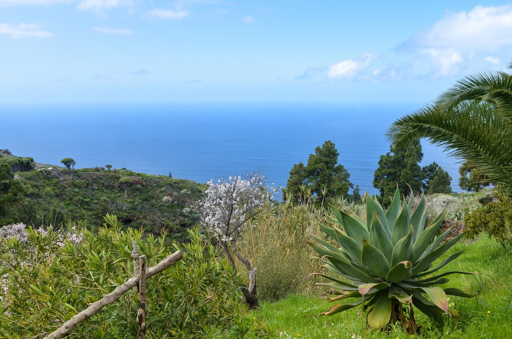 La Palma - Impressionen - Nr. 22