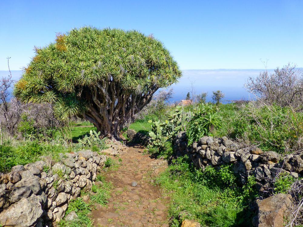 La Palma - Impressionen - Nr. 4