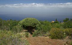 La Palma Landschaft