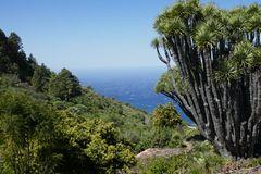 La Palma Nr. 10