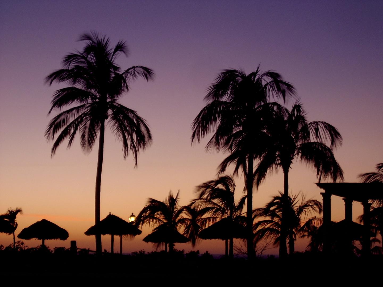 La palmeras