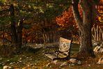 La panchina nel bosco
