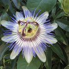 La pasion dentro de una flor