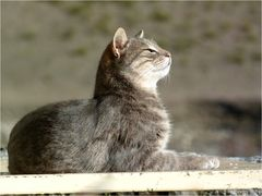 *la pause kit-cat*