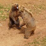 La pelea ( Cabarceno )