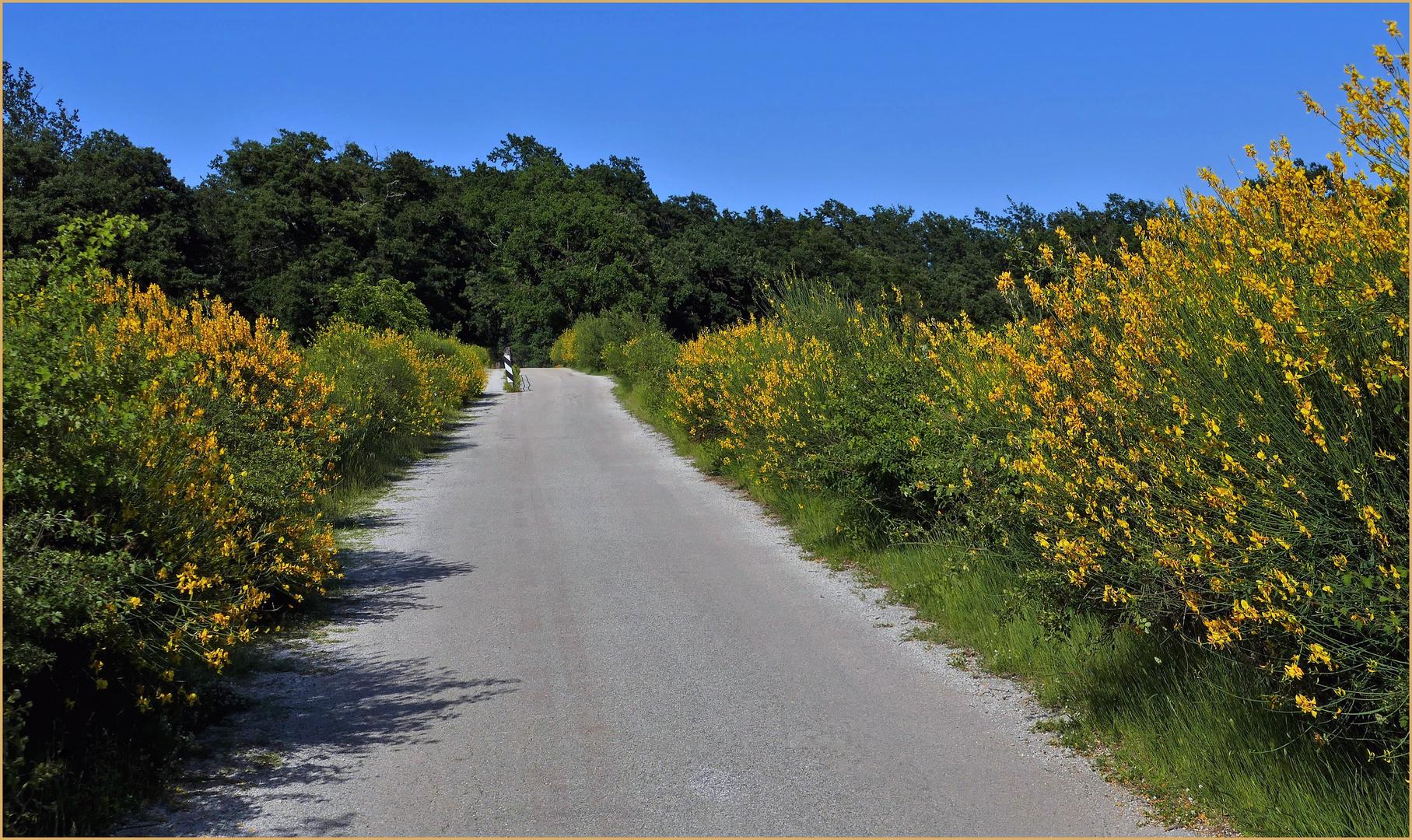 "la"" période jaune"" de la nature ......"