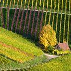 la petite maison dans les vignes