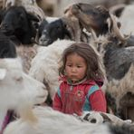la piccola nomade