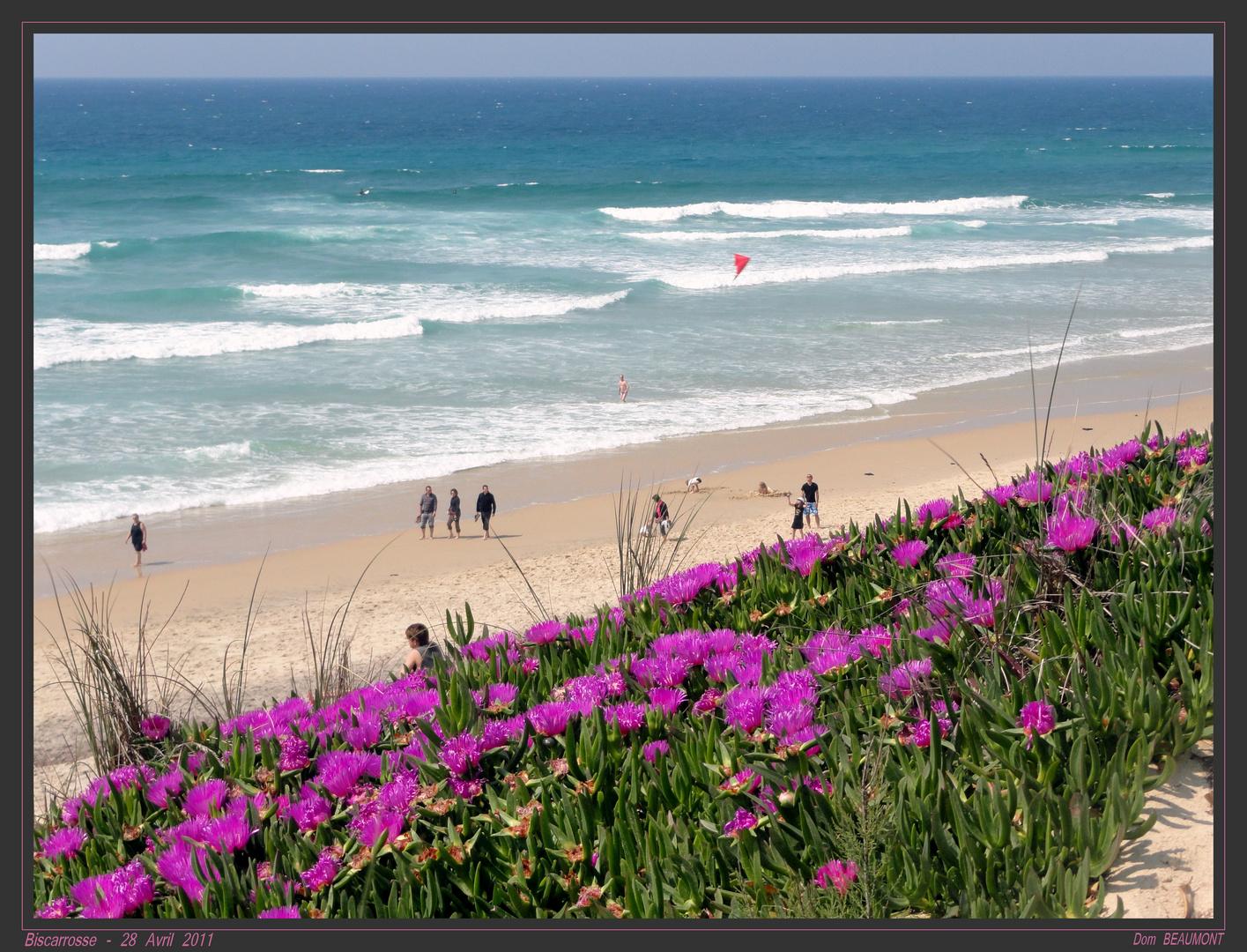 La plage au printemps