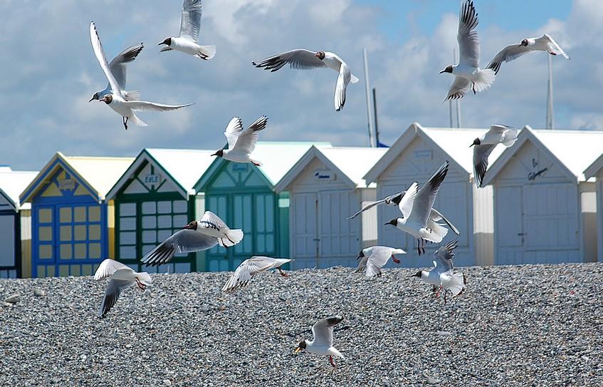 La plage de cayeux sur mer photo et image divers nature for Garage cayeux sur mer