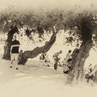 La playa de Kastela