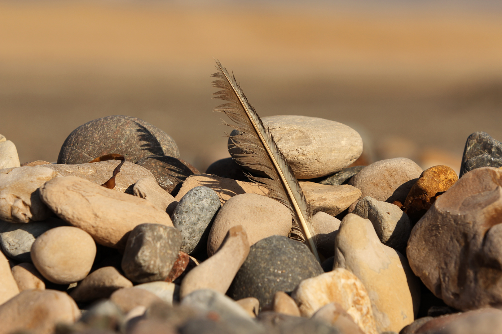 La pluma