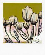 La pola-tulip