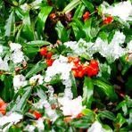 La prima neve a Pesaro rende ancora piu colorata la natura.