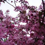 La primavera è uno stato del cuore