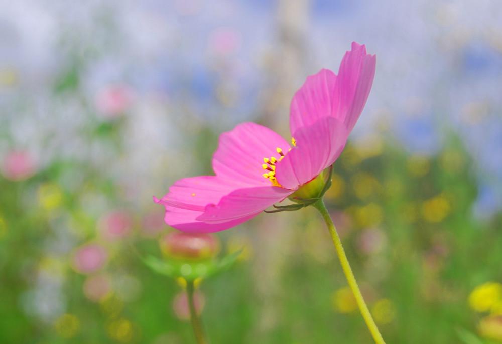 la primavera se viste de rosa
