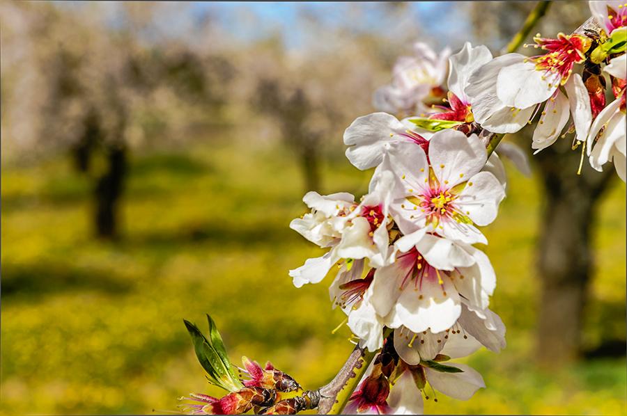 cdfa4c9feba2 La Primavera ya esta aquí Imagen   Foto