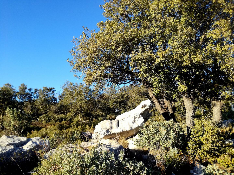 La Provence en hiver ....