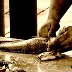 La pulitura del pesce..