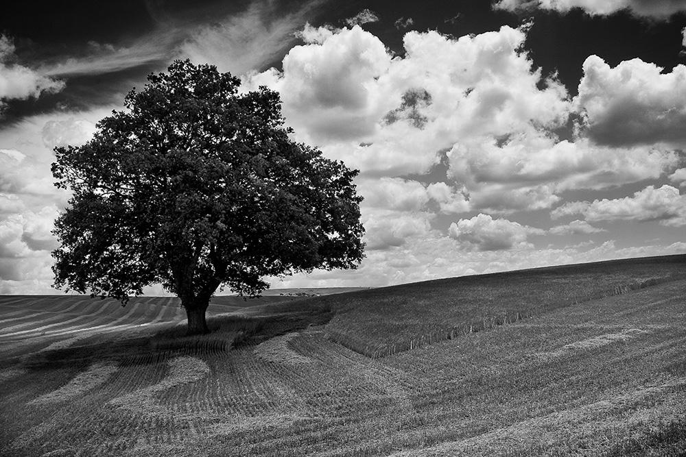 La quercia solitaria foto immagini tecniche speciali for Disegni bianco e nero paesaggi
